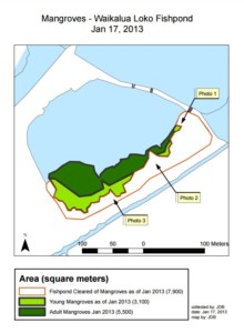Mangrove Data image