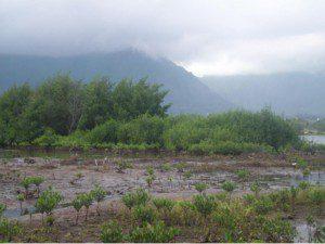mangroveimage1