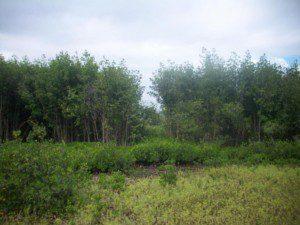 mangroveimage3
